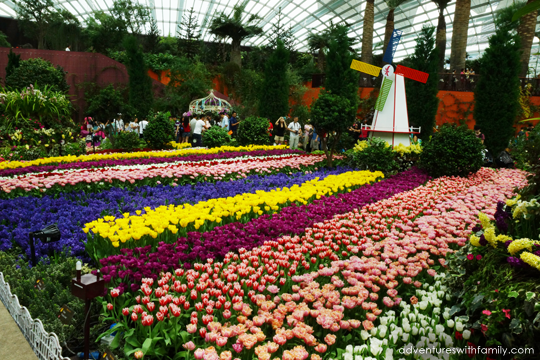Tulipmania-Gardens-by-the-Bay-3