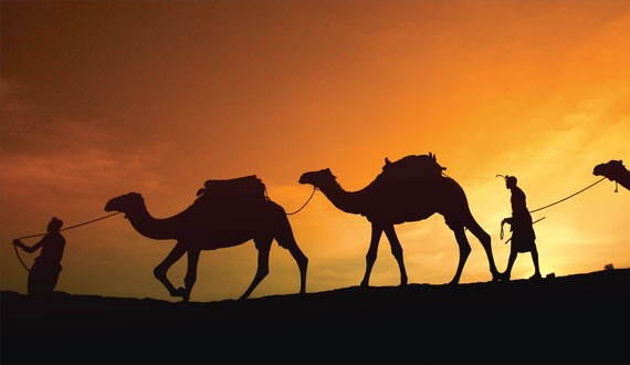 camel-trek-near-marrakech