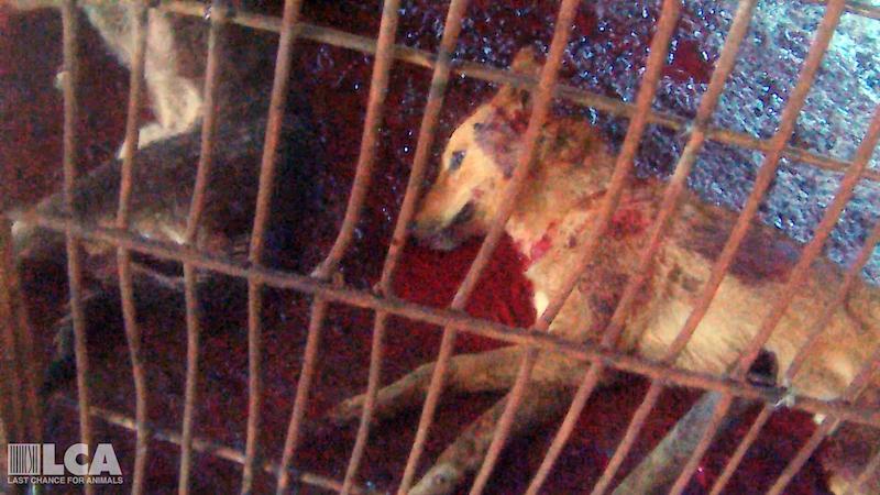 Bloody_Dog-66e5139bdc5383c999b05fcae5645fd5