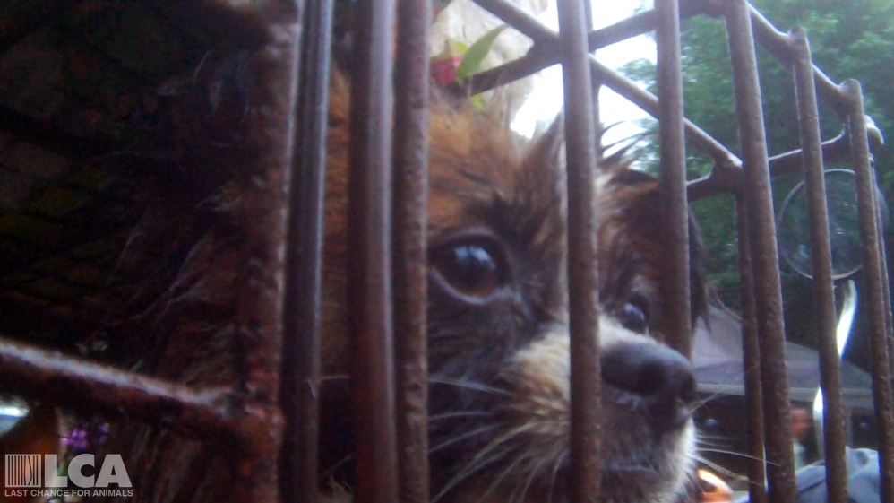 closeup_dog_face-400b83c5768a94fc994e75e73969f3ee