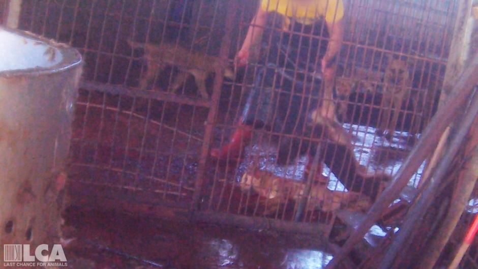 Dog_being_killed-e3666283637d927cb6367921d44d053f